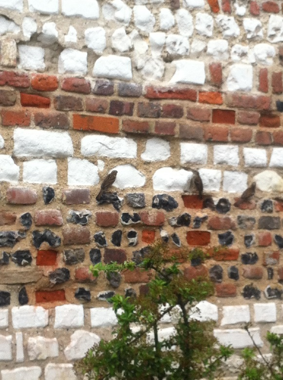 Chalk, Flint and brick repointing